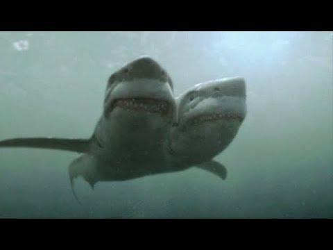 STRANGEST Shark Species