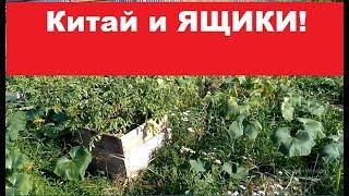 Русские ящики и КИТАЙСКИЙ МЕТОД! 18 августа 2018 год.