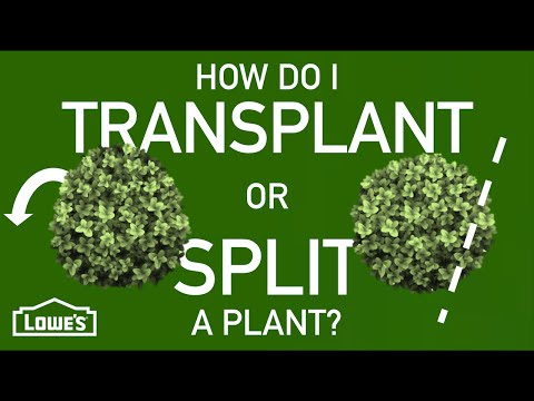 How Do I Transplant or Split a Plant? | Gardening Basics w/ William Moss