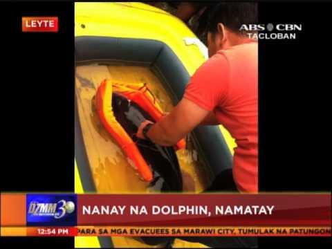 Mag-inang dolphin, natagpuang sugatan sa Leyte