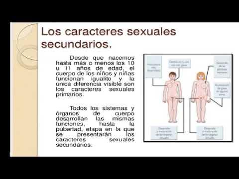 Caracteres Sexuales Primarios Y Secundarios Youtube