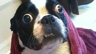 Ultimative Sjove Hund Videoer. Kompilering [Hd]