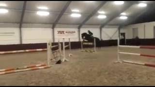 Продается великолепный конкурный Пони. Рост: 1.49