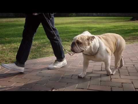 Georgetown Faces: Georgetown University Promotional Spot