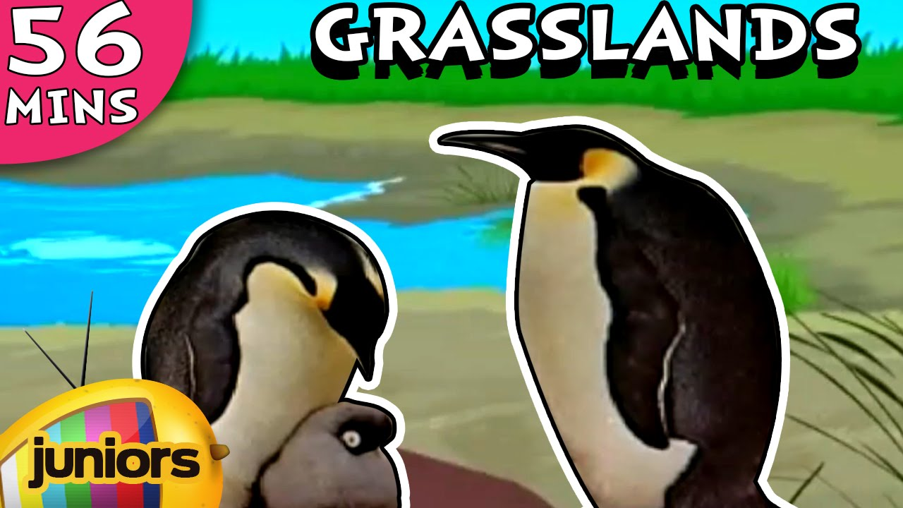 Learning Videos - Temperate Grasslands - Learning  Videos For Kids - Education Videos - Biomes