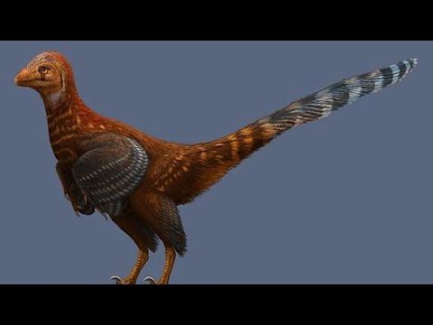 Feathered Dinosaur That Looked Like a Giant Chicken