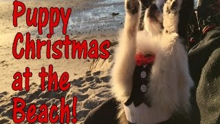 Panda Puppy Christmas at the Beach ( Panda Puppy Au Naturale Vlogmas Day 7 )