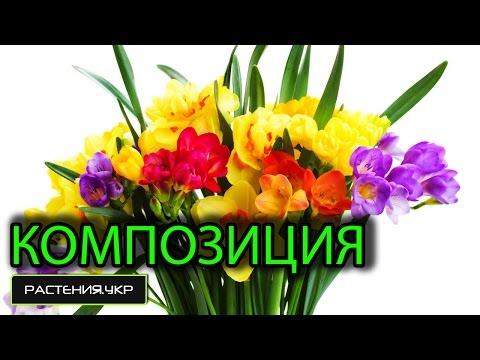 Композиции из живых цветов / Цветок нарцисс