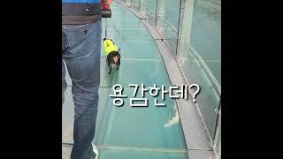 [겨울일상]# 113 닥스훈트○●쫄보댕댕이들 이거 할수…