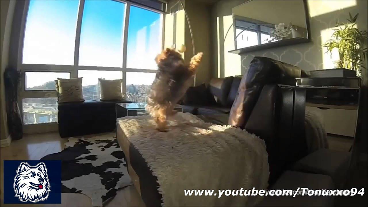 funny dog fails compilation youtube funny dog fails compilation