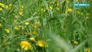 Baixar Directia 5 ft  Andra - First Days Of Spring (Official Single)