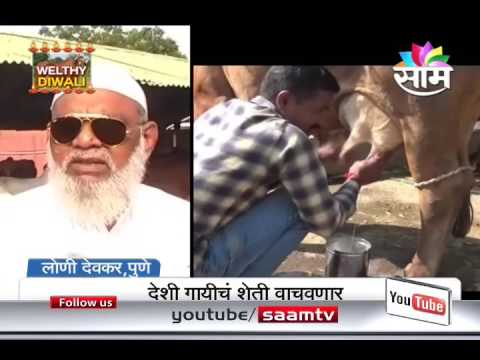 Cow Conservation getting lot of awareness after Saam Telecast