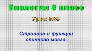 Биология 8 класс (Урок№8 - Строение и функции спинного мозга.)