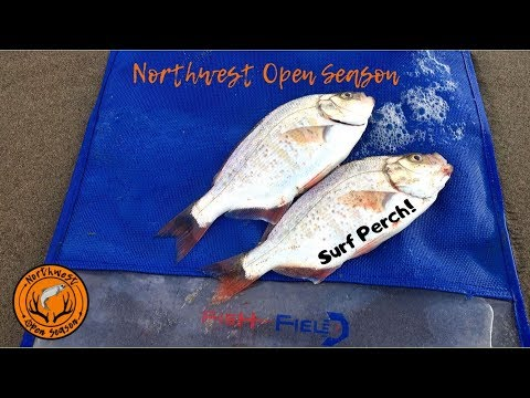 Surf Perch Fishing The Oregon Coast + Tips And How To