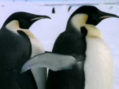 Animals' Mechanism To Survive In Hot And Cold Temperatures