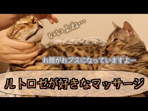 ルトとロゼに猫用マッサージをしたら天使みたいな顔になった!