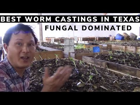 Best Worm Castings I Found In Texas And Maybe The USA