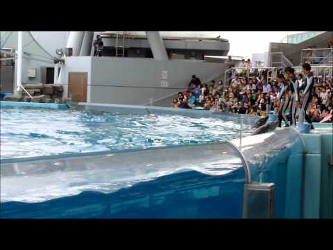 Nagoya Port Aquarium Dolphin Show