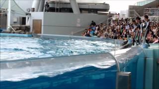 Nagoya Port Aquarium Dolphin Show