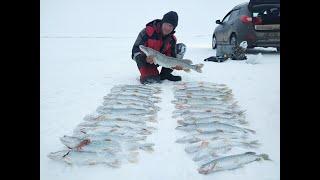 РЫБАЛКА НА ЗАБЫТОМ ОЗЕРЕ НЕ ОЖИДАЛ ТАКОГО ЖОРА ЩУКИ Рыбалка в Казахстане Рыбалка 2021