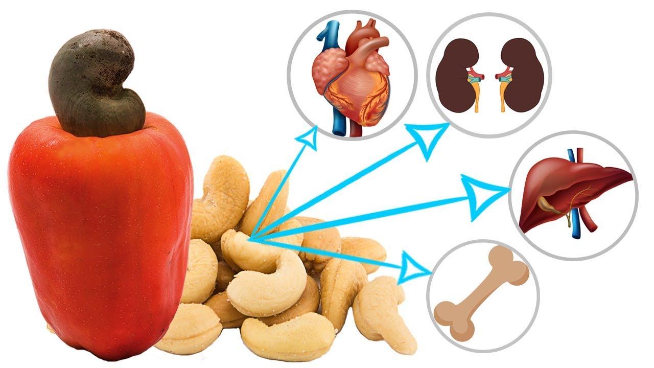 Cashew Apple - Cashew Nutrition - Health Benefits Of Cashew Fruit ...