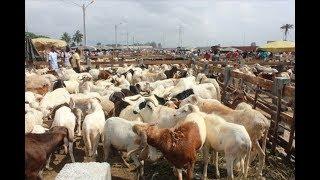 Tabaski 2017 : Constat du marché du bétail après la décision du gouvernement