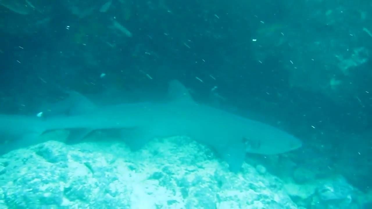 How do sharks sleep