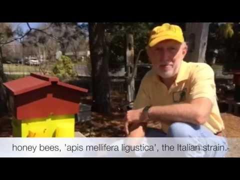 Barlow's TV Episode 46 Backyard Beekeeping with Stephen Barlow & Dennis Rittenhouse