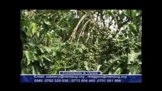 Mixed farming in Uganda