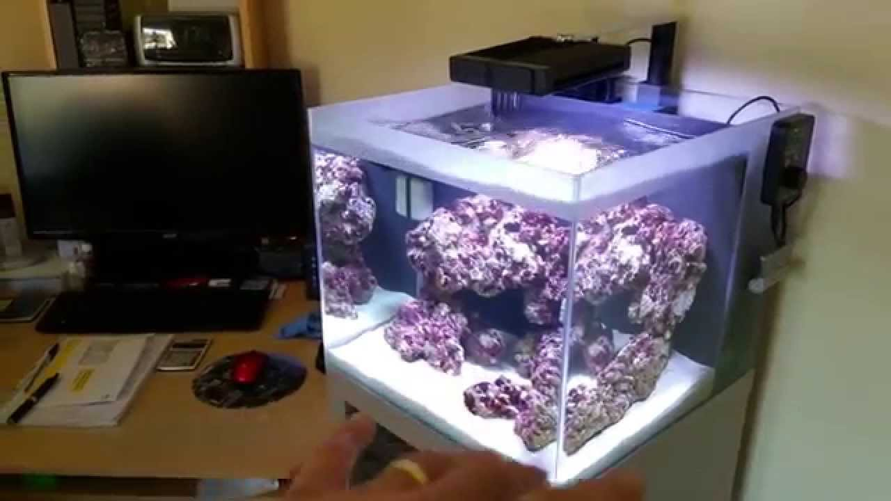 Nano Reef Fluval M40 Part 1 2 Weeks Youtube
