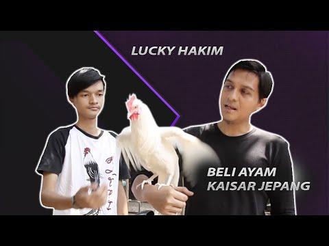 Lucky Hakim Beli Ayam Ekor Panjang