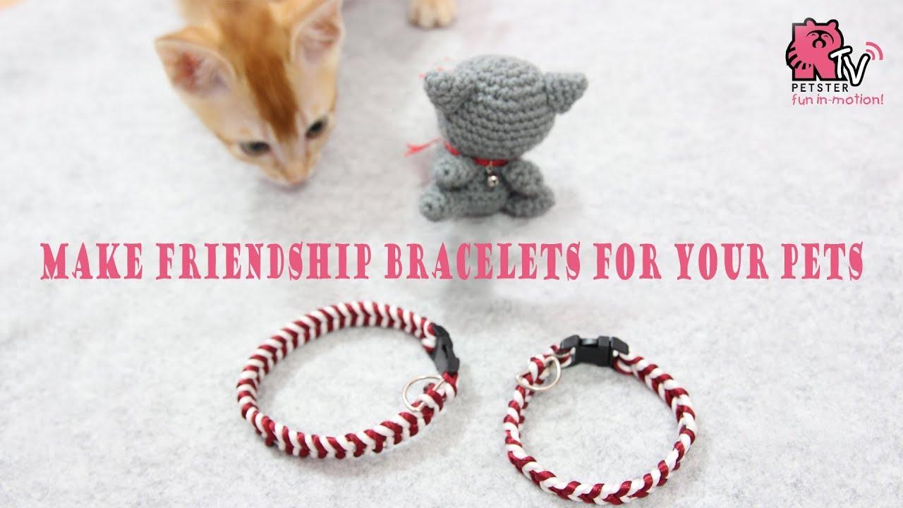 Turn Your Friendship Bracelet Into A Pet Collar Diy Tutorial