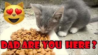 Stray Cats and Kittens Eating Cat Food And Playing Cat Games