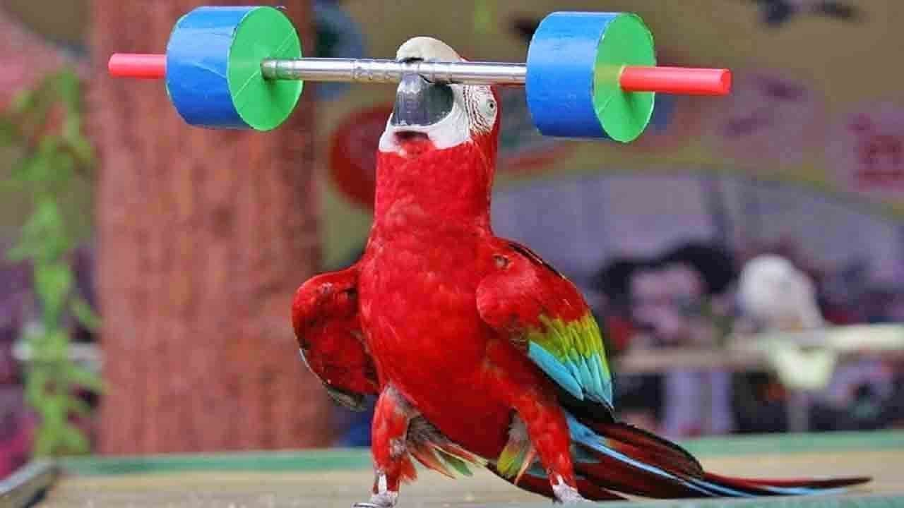 Cute bird trick funny parrot and bird videos funny parrots compilation 2018 youtube - Funny bird pics ...