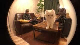飼主が編集中、猫は何しているのか隠し撮りしてみた