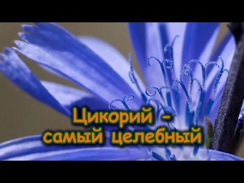 Блог Елены Шаниной