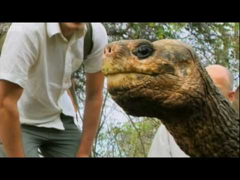 Thumbnail: Lonesome George the Galapagos Tortoise - Explore - BBC