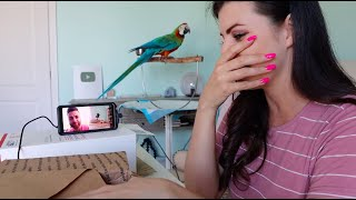 my-parrots-reaction-to-my-big-reveal