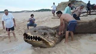Undefined Sea Creature