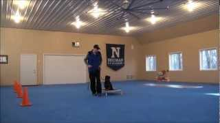 Bear (rottweiler) Dog Training Boot Camp Video