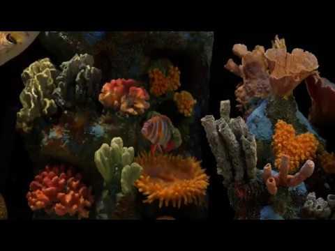 Akvaryum, Aquarium, Fish Tank 1080p Full HD Dinlendirici akvaryum video