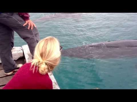 Whales at the Wharf Tathra