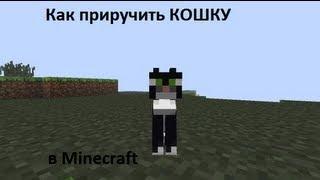 Как приучить кошку в Minecraft