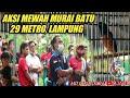 Lihat Aksi Murai Batu Super Mewah  Metro Lampung  Mp3 - Mp4 Download