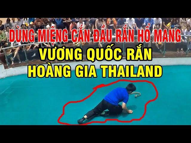 VƯƠNG QUỐC RẮN HOÀNG GIA THAILAND DÙNG MIỆNG CẮN ĐẦU RẮN HỔ MANG CHÚA
