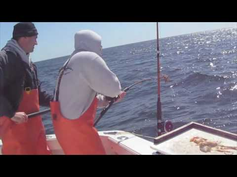 SWEET DREAM III Sportfishing - Tillies Haddock - Gloucester MA