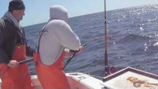 SWEET DREAM III Sportfishing - Tillies Haddock