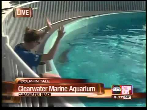 Sean Daly live from the Clearwater Marine Aquarium