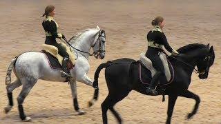 Великолепные андалузские жеребцы Damasco и Romano! #ИППОсфера 2019 Андалузская порода лошадей