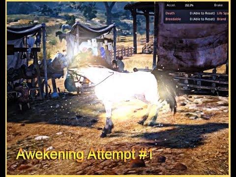 Tier 9 Dream Horse 1st Awakening Attempt - Black Desert